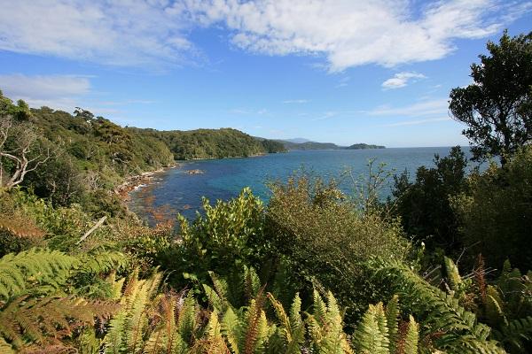 Stewart Island Views